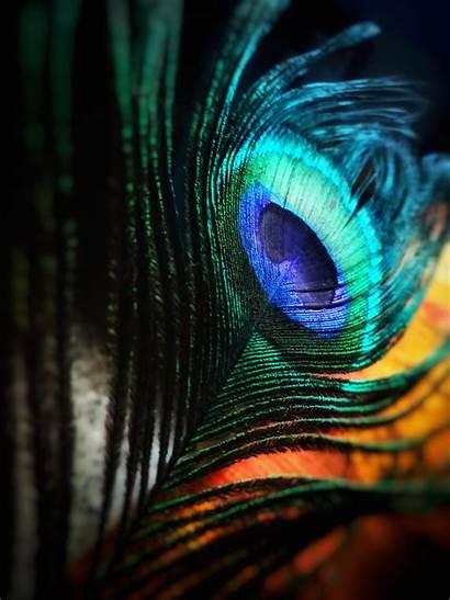 Pexels Bright Bird Srgb Cs