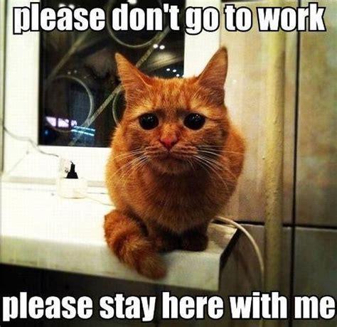 Tabby Meme - related keywords suggestions for orange cat meme
