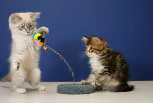 cats play cat toys which ones are safest safebee