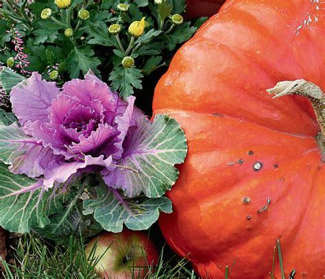 comment cultiver de beaux potirons d 233 tente jardin