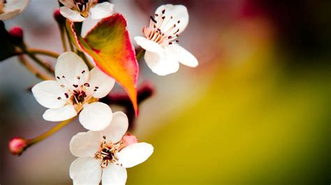 Hd Wallpapers For Pc Full Screen Flower
