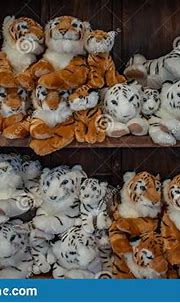 Plushies Bengal Tigers And White Tigers At Busch Gardens 2 ...