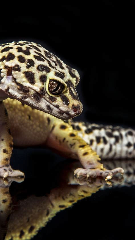 wallpaper gecko reptile lizard caterpillar close
