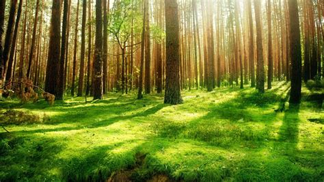 Forest Background Wallpaper