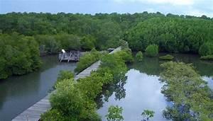 Luas Lahan Mangrove Di Indonesia Semakin Merosot