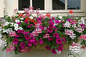 Comment Remplir Une Grande Jardinière : r ussir un jardin suspendu promojardin ~ Melissatoandfro.com Idées de Décoration