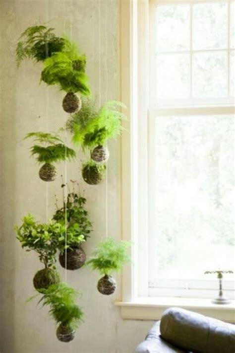 Hängende Pflanzen Wohnung by H 228 Ngende Zimmerpflanzen Und Balkonpflanzen