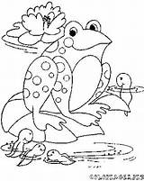 Tadpole Coloring Pages Frog Drawing Template Getdrawings Printable Templates Sketch Getcolorings sketch template