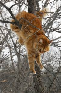 cat climbing tree cat climbing tree photofarmer 1 yay