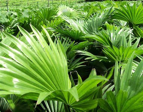 natural plants  cut leaves exporters sri lanka asia