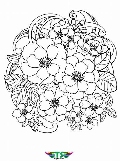 Coloring Flowers Flower Printable Tsgos Stunning Colouring