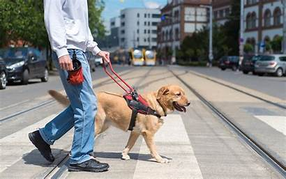 Service Guide Dog Dogs Street Crossing Ts