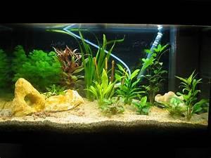 Idee Decoration Aquarium : photo d coration interieur d 39 aquarium ~ Melissatoandfro.com Idées de Décoration