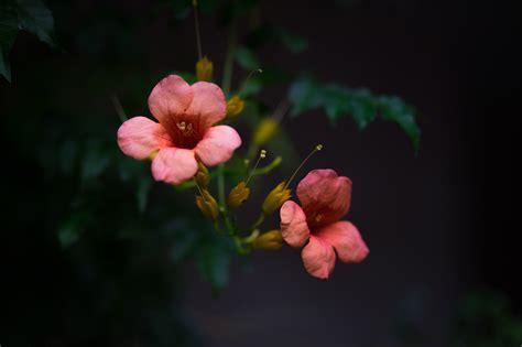 best home interiors flowers on background splitshire