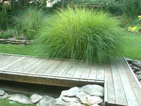grass for landscaping ornamental grasses landscaping with ornamental grasses home constructions