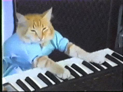 piano cat the 5 most important cats on the sidereel