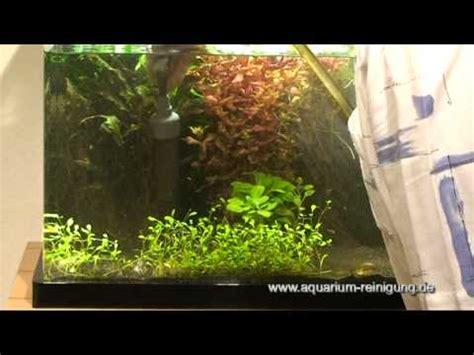 aquarium boden reinigen bodengrund reinigen mit mulmglocke