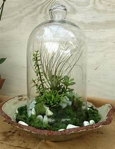 Deko Im Glas Ideen : sukkulenten im glas im blickfang kreative deko ideen mit pflanzen ~ Orissabook.com Haus und Dekorationen