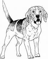 Dogs Realistic Drawing Coloring Dog Pages Printable Breed Getdrawings sketch template