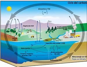 File Carbon Cycle-cute Diagram-espanol Svg