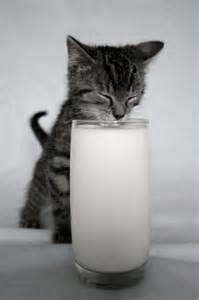 milk and cats 301 moved permanently