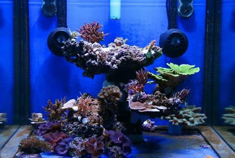 Top Reef Tank Aquascapes  My Old 2m Reef Reef