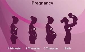 Schwangerschaft 3 Trimester : how a woman 39 s body changes during 9 months of pregnancy ~ Frokenaadalensverden.com Haus und Dekorationen