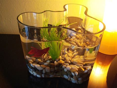 creative unique fish bowl designs  pets central