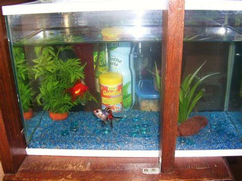 entretien aquarium eau froide aquarium poisson eau froide