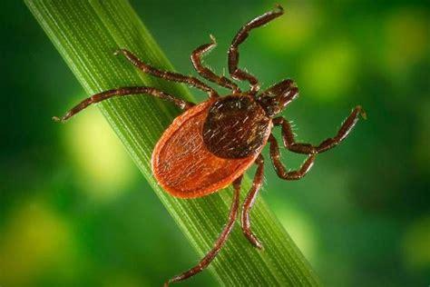Paraziti kod zivotinja - Gliste i paraziti kod pasa