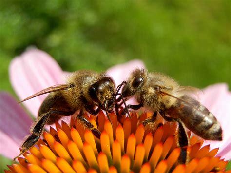 Wo Bienen Die Beste Nahrung Finden Und Was Sie Gesund Hält