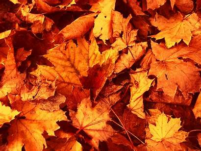 Leaves Autumn Wallpapers