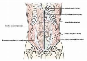Inferior Epigastric Artery
