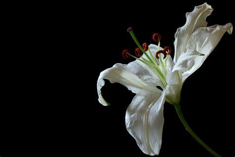 flower photography redzenradish photography