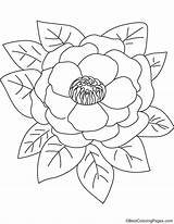 Pink Peony Coloring sketch template
