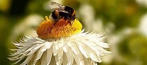 Was Macht Man Mit Amaryllis Nach Der Blüte : best uberinsekten ihre bedeutung f r den menschen bee ~ Lizthompson.info Haus und Dekorationen