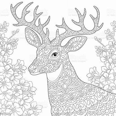 Coloring Garden Spring Flower Deer Animal Colorear