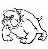 Coloring Pages Bull Bulldog Puppy Bulldogs Pitbull Georgia Head Dog Drawing Drawings Necklace Pit Vicious Realistic Face Spikey Wearing Nose sketch template