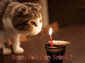 happy birthday cat 50 happy birthday gif pictures