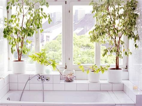 plantes pour chambre salle de bain vs plantes jardiner en ville