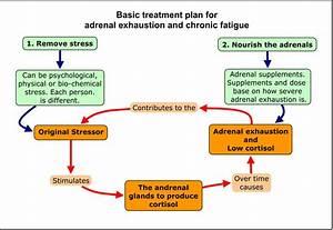 Synergy Health  U0026 Wellness   U0026quot Adrenal Fatigue U0026quot   Intense