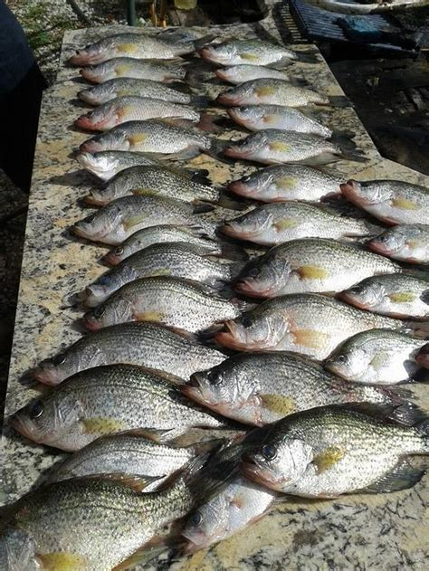 site catching crappie  broward