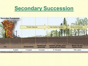 Venn Diagram Of Primary And Secondary Succession