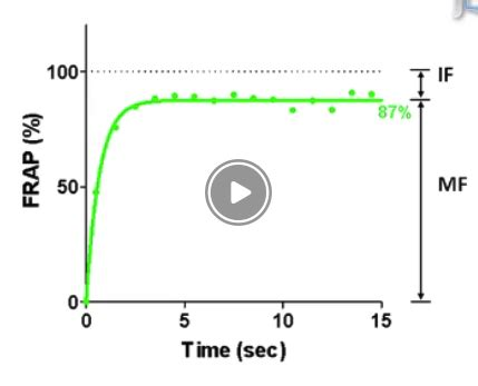performing  fluorescence recovery  photobleaching