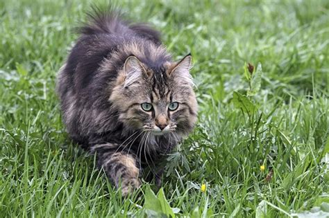 cats torture  prey cuteness