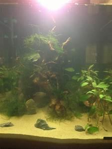 60 Liter Becken : 60 liter kugelfisch becken ~ Michelbontemps.com Haus und Dekorationen