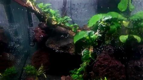 Lava L Fish Tank Diy by Nano Cube 40 Liter Aquascape Lava Rock Anubias Barteri