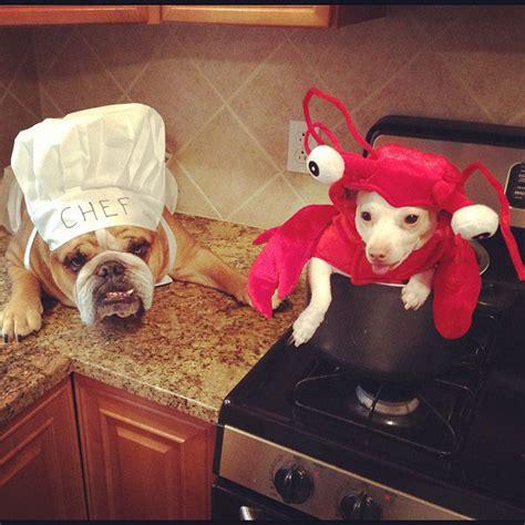 chien cuisiné chien cuisine autre chien soocurious