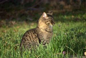 Photo of Brown Tabby Cat in Grass - Brian Humek Photography
