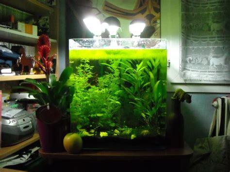 dennerle nano cube 60l proiecte de 238 ncercat aquariums and planted aquarium